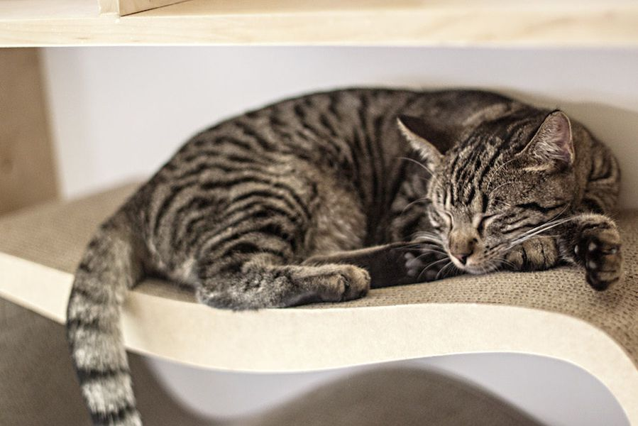 The Day Has Come Nyc S First Cat Cafe Is Officially Open
