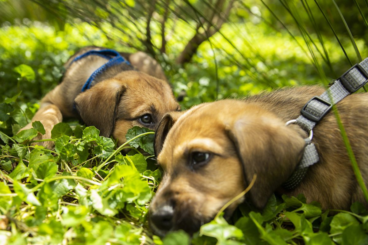 NSW Government Announces Crackdown On Illegal Puppy Factories