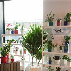 """Plants from <a href=""""http://www.thesill.com/""""><b>The Sill</b></a>"""