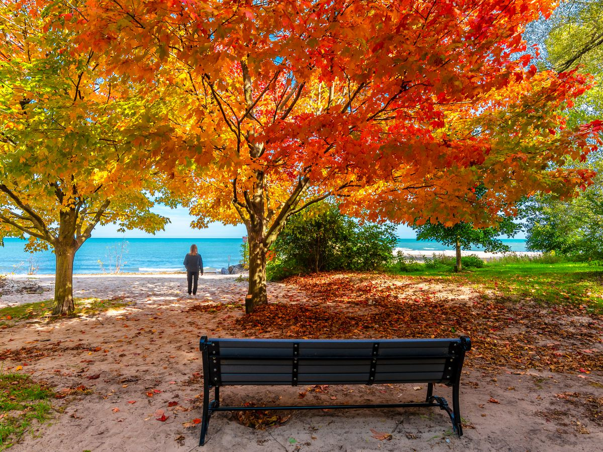 A park bench by the water full of autumn colors.