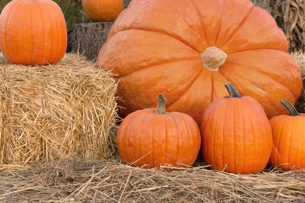 Thanksgiving Point is gearing up for Halloween with three events — the annual Scarecrow Festival, a Witch's Breakfast and the Dia de los Muertos (Day of the Dead) celebration.