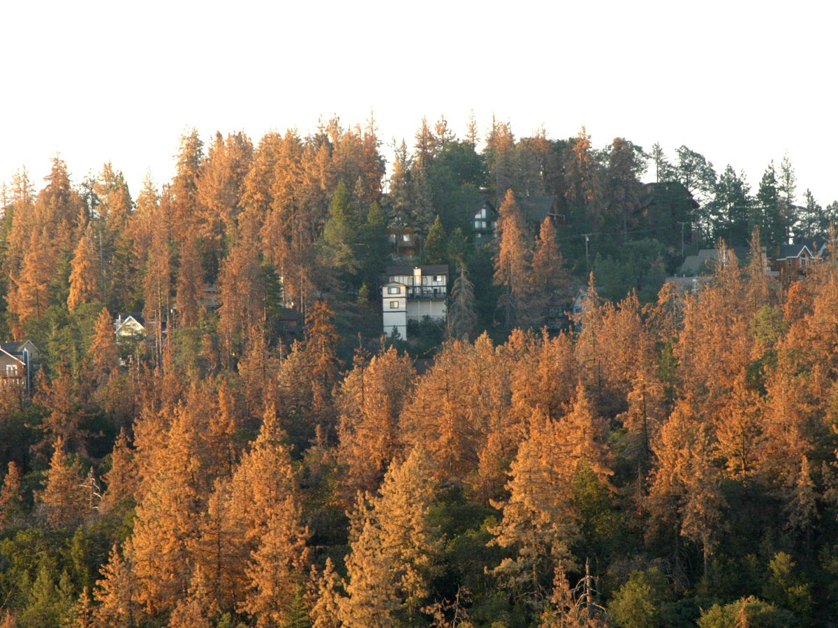 A white house on a mountain surrounded by trees with colorful autumn leaves in Los Angeles.