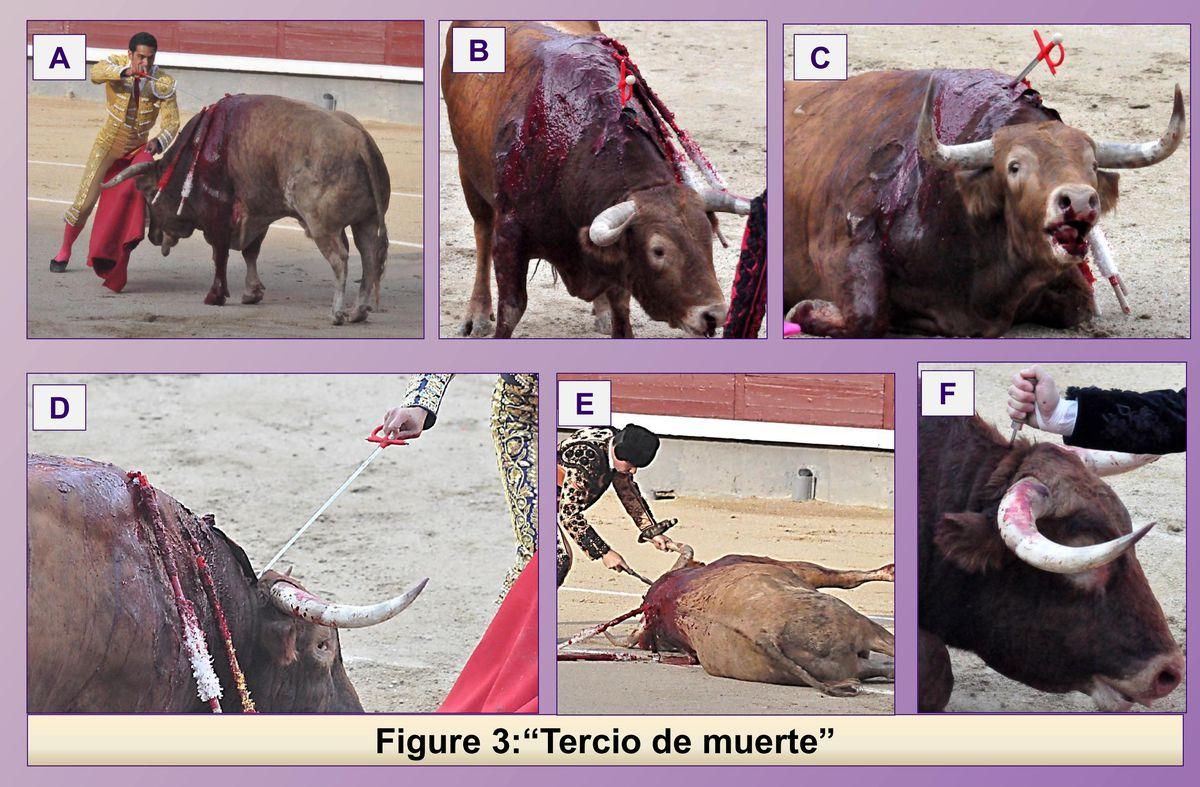 Bullfighting, in detail