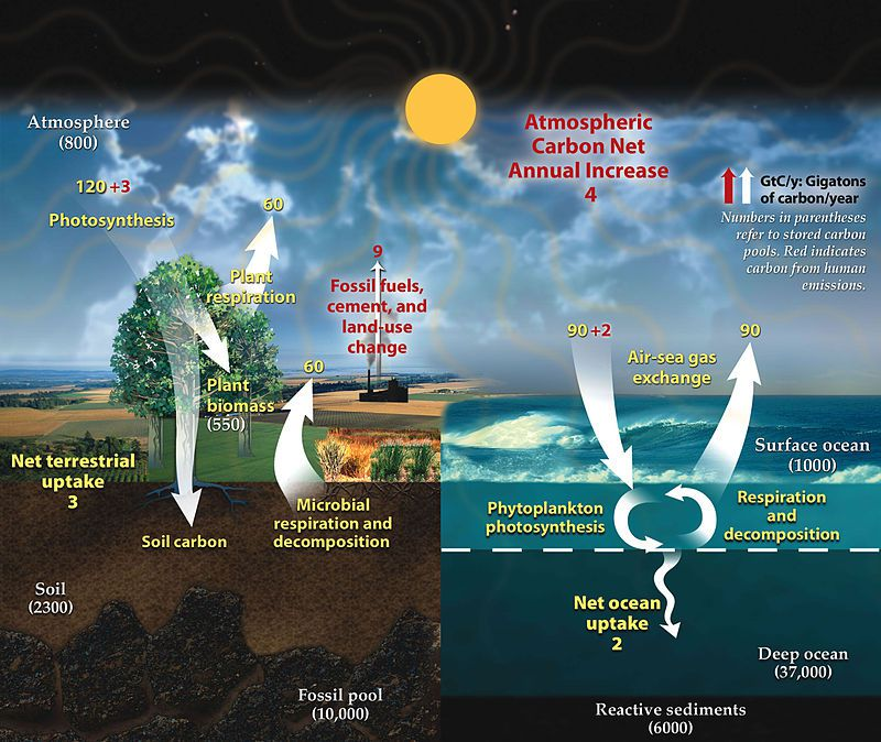 carbon cycle redux