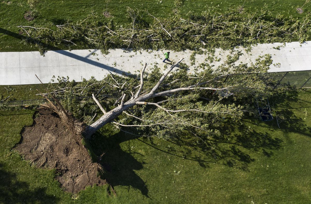 A tree that as toppled by high winds at Sunnyside Park in Salt Lake City is pictured on Wednesday, Sept. 9, 2020. Several trees in the park were felled during a windstorm on Tuesday.