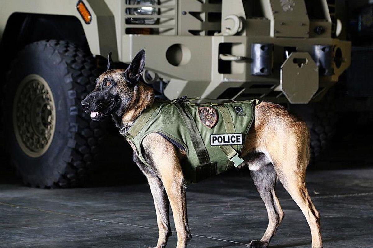 Dingo, a 7-year-old Belgian Malinois with the Unified Police Department, was shot and killed while helping U.S. Marshals take a wanted fugitive into custody.