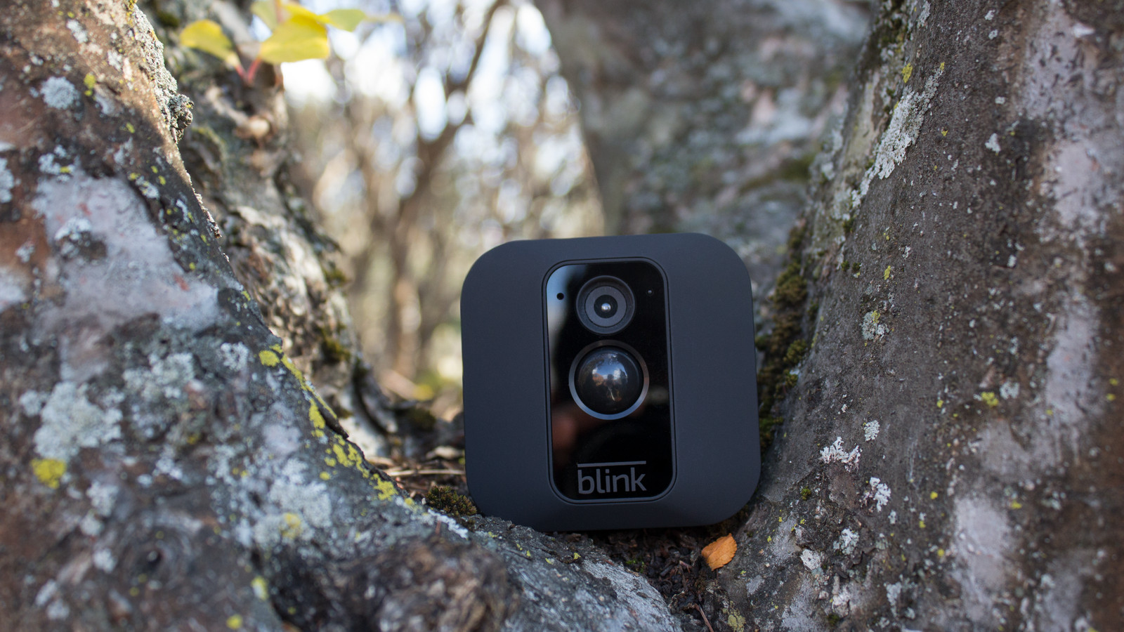 Blink's newest security camera can be hidden in a tree