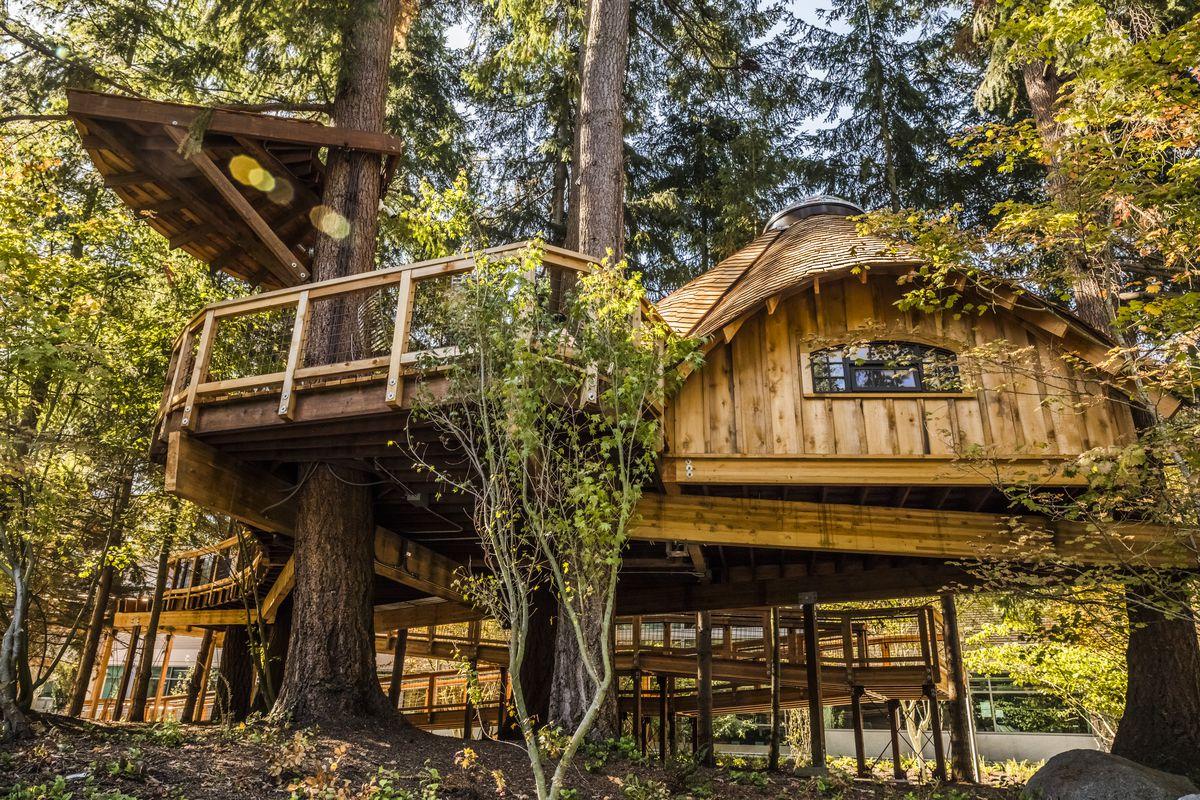 treehouse on Microsoft campus