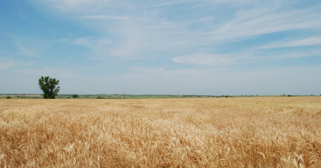 Gratitude Weekly: Thankful For Being A Nebraskan & Big Ten ...