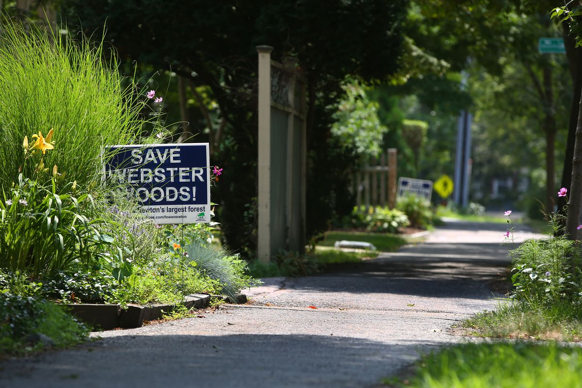 """A sidewalk in a leafy suburb with a sign saying, """"Save Webster Woods!"""" planted in the grass."""