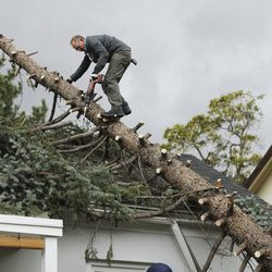 Joe Booth cuts the limbs off of a tree that fell on his house after high winds in the Avenues in Salt Lake City on Tuesday, Sept. 8, 2020.
