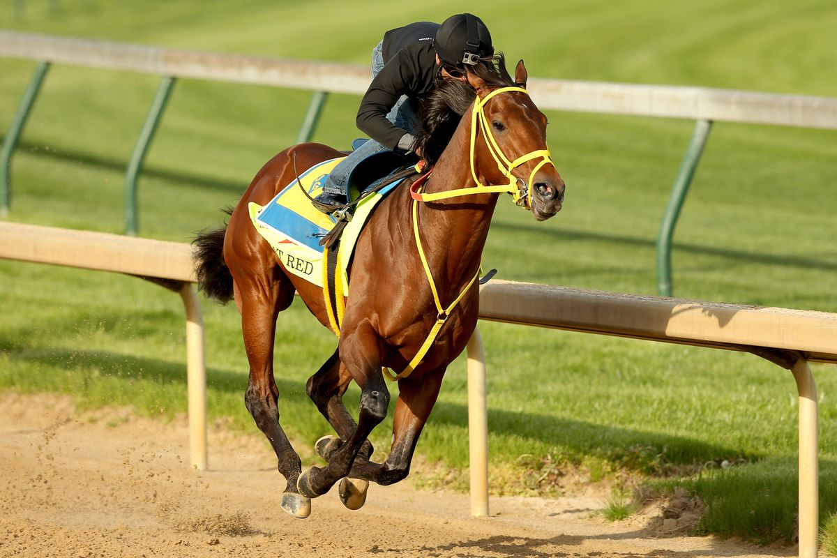 2014 Kentucky Derby Contenders Wildcat Red And Down The