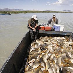 Stetson Crawford, left, and Jeff Smith, members of Bill Loy's fishing crew, take a load of carp to the shore, will they will be unloaded into a trailer.