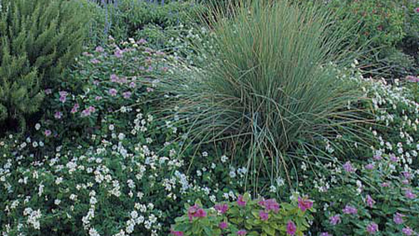 15 Foolproof Shrubs This Old House