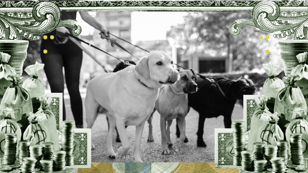 Photo illustration of a group of dogs on leashes surrounded by a frame of cash.