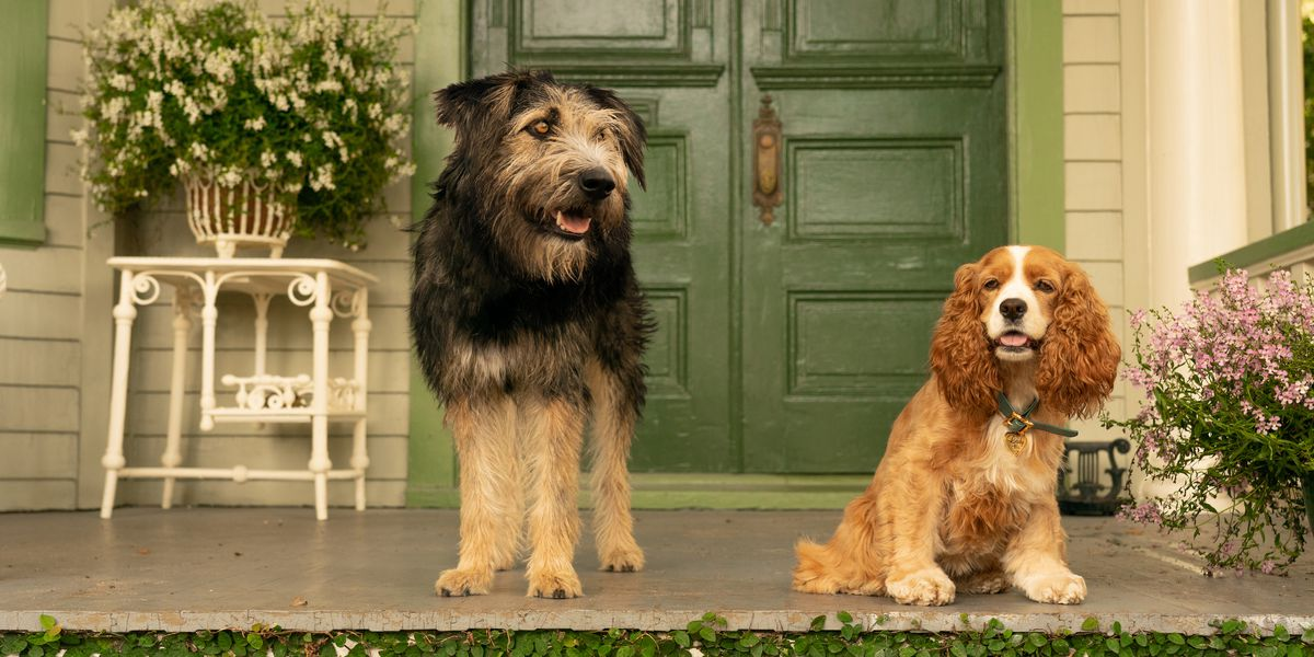 The live-action Lady and the Tramp feels like a theme-park version of real life