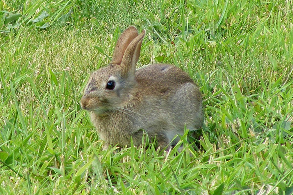 This is a picture of a cute bunny rabbit for no reason