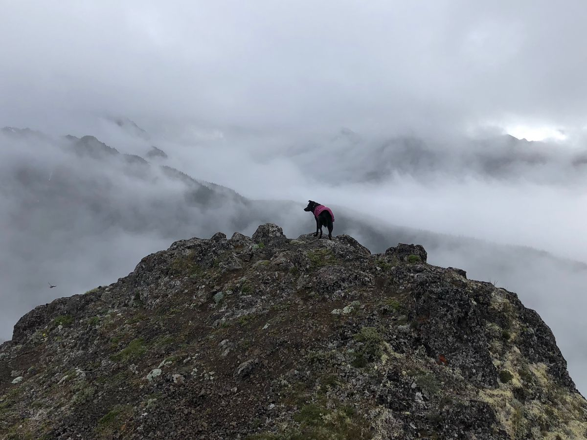 In the foreground is a cliff. A black dog is standing on the cliff. In the distance are mountains and heavy fog.