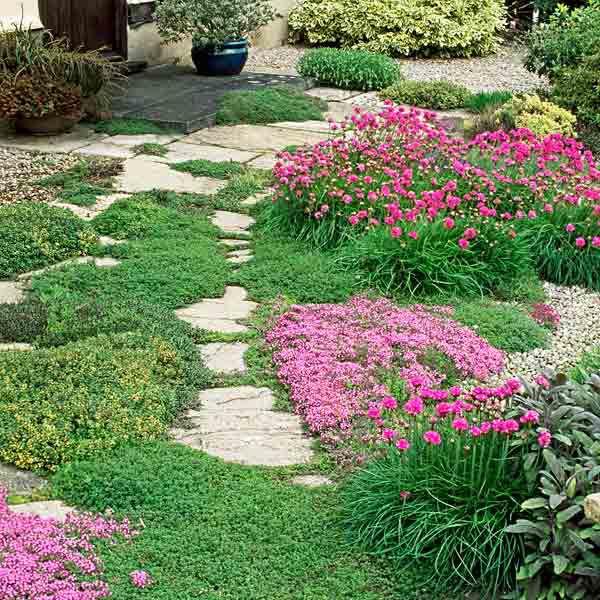 Groundcover In Garden