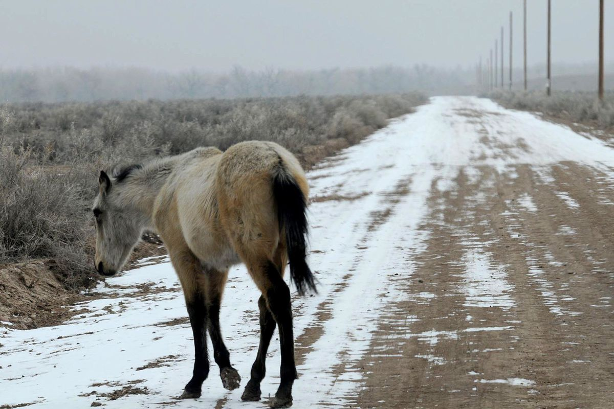 Uintah County plans to round up stray, abandoned horses next year