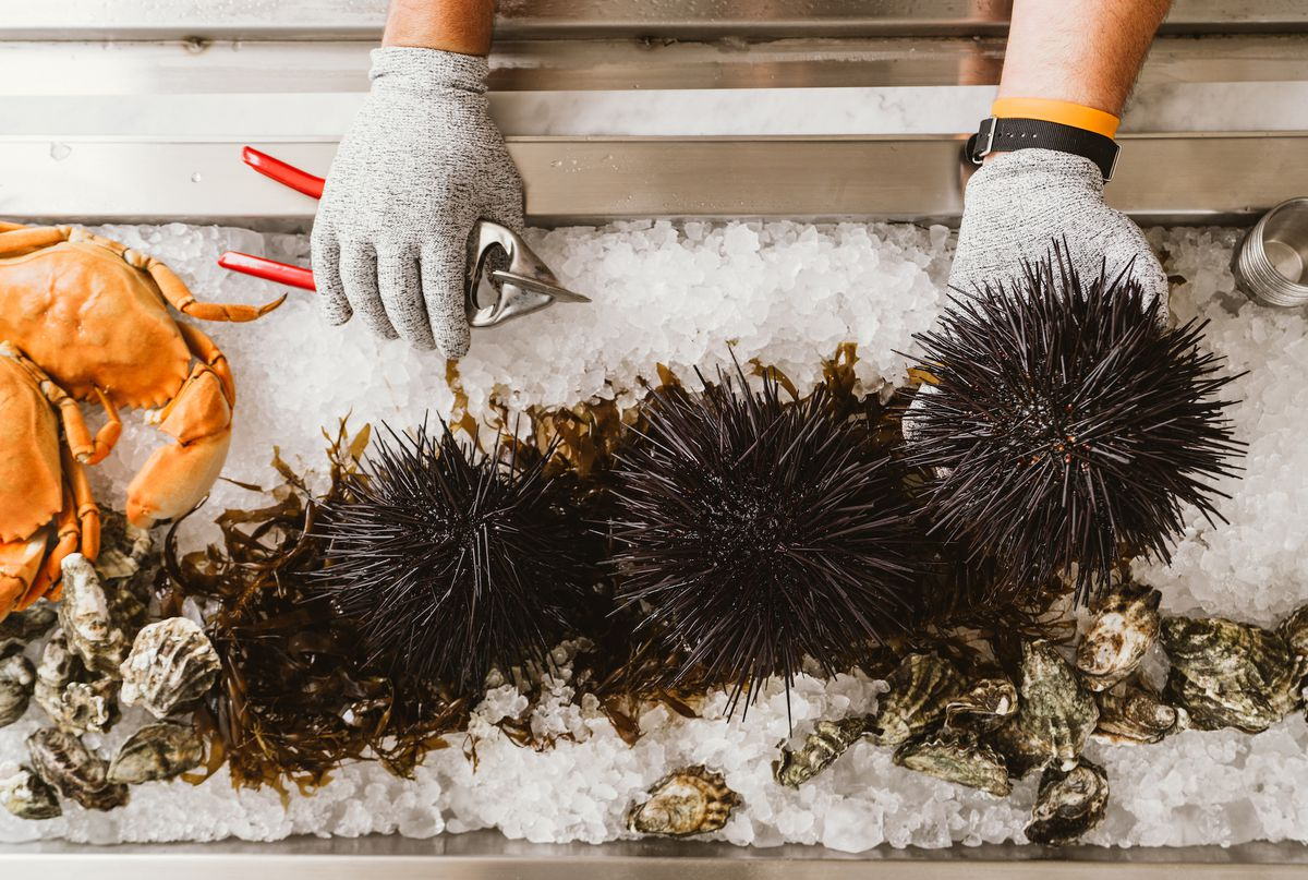 Two hands pick up a lobe of uni and get ready to shuck.