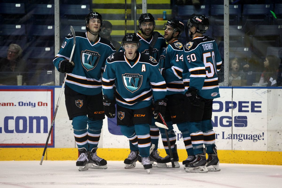 The Worcester Sharks celebrate forward Bryan Lerg's third period goal against the Springfield Falcons during Tuesday's game at the MassMutual Center (Teamshred.smugmug.com).