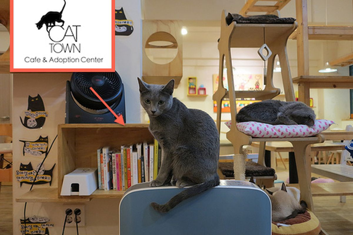 A Japanese cat cafe.