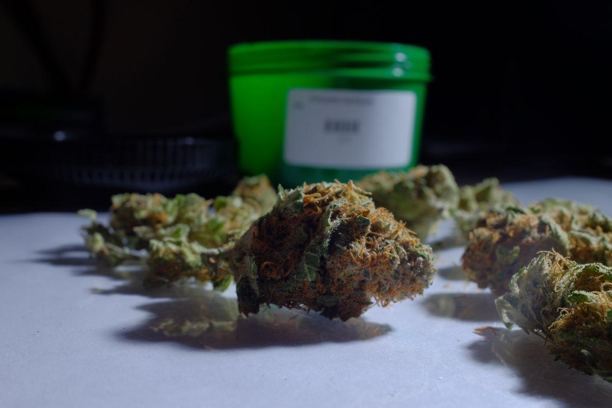 Buds of marijuana.