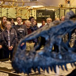 Workers and volunteers at the Utah Museum of Natural History attend the unveiling of Allosaurus jimmadseni, a new species of meat-eating dinosaur, at the museum in Salt Lake City on Friday, Jan. 24, 2020. The beast inhabited the flood plains of western North America 157 million years ago, making it the geologically oldest species of allosaurus.