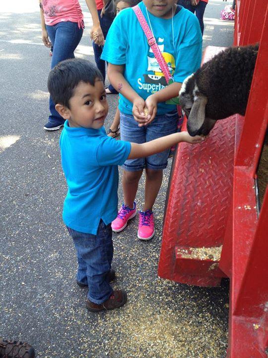 Crizman Villatoro enjoys a petting zoo during summer camp at Su Casa.