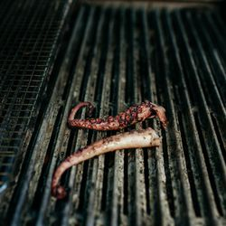 Octopus gets a char on the grill before going to the plate.