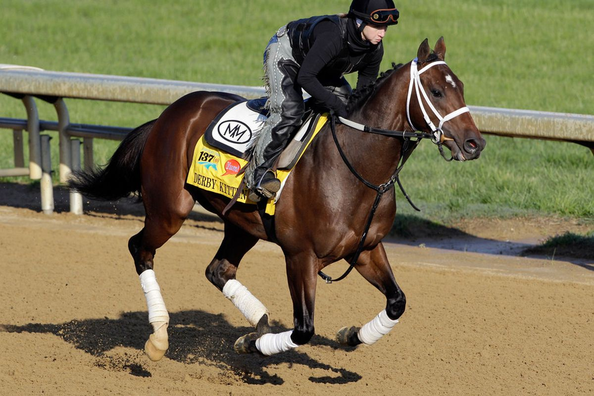 LOUISVILLE, KY - MAY 05:  Kentucky Derby entrant Derby Kitten works on the track in preparation for the 137th Kentucky Derby at Churchill Downs on May 5, 2011 in Louisville, Kentucky.  (Photo by Rob Carr/Getty Images)