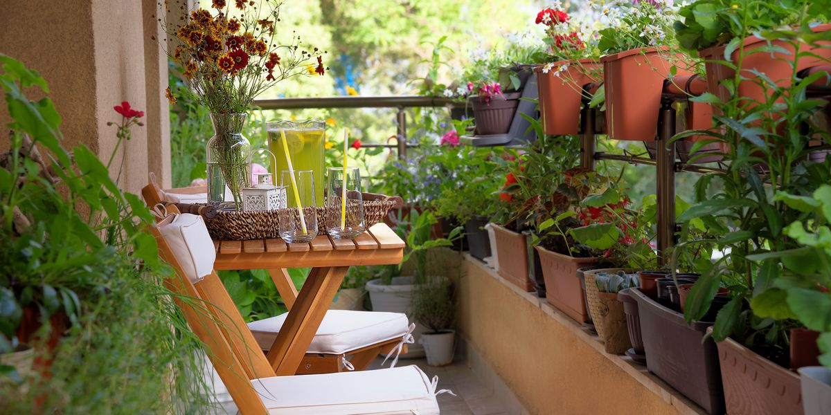 Urban gardening: Best tips and products for small spaces