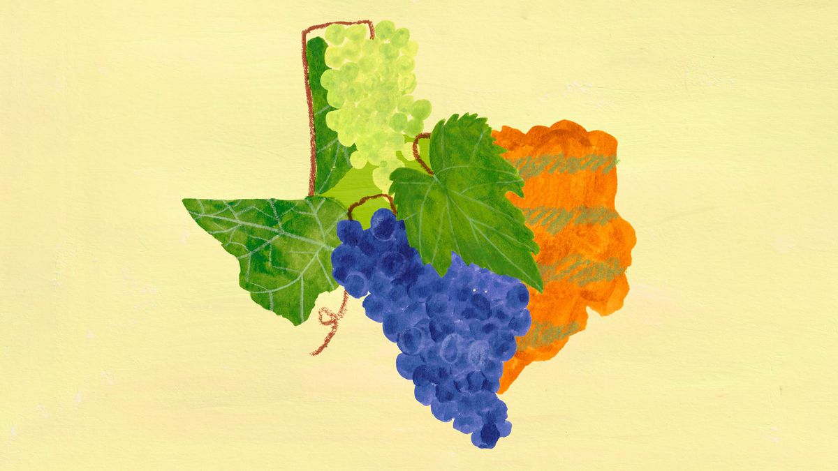 A drawing of purple and white grapes, green leaves, and brown dirt making up the shape of Texas.