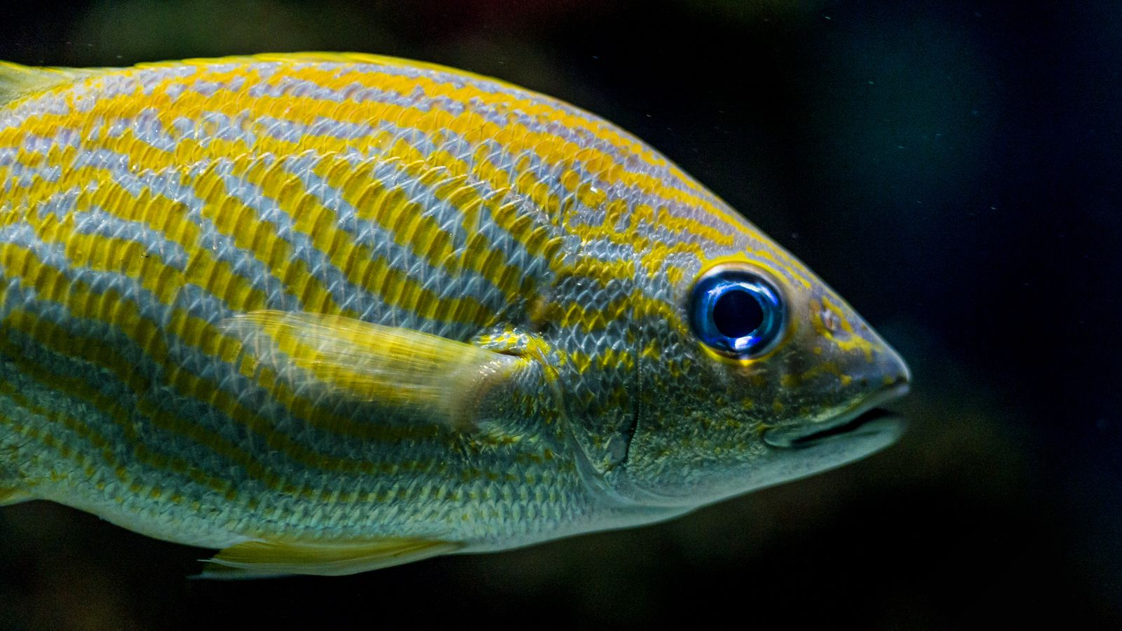 Are fish far more intelligent than we realize vox for Are fish smart