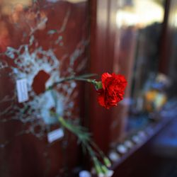 A red carnation peeks out from a bullet hole in one of the restaurant's windows