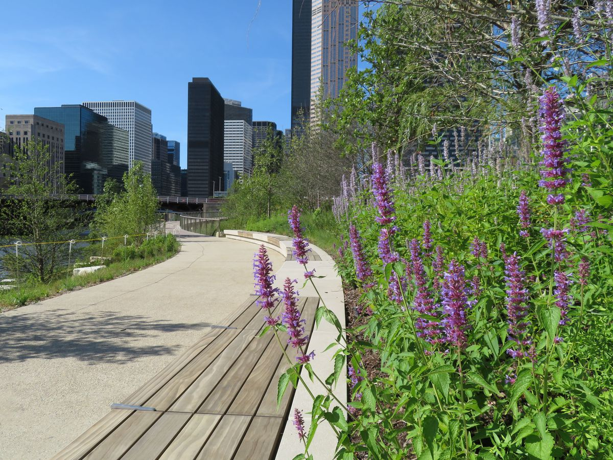 A stone pathway lined with leafy green plants, purple flowers, and wood benches. A river and skyscrapers are visible in the distance.