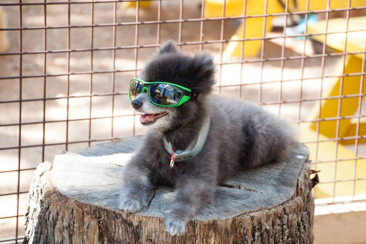 Your pooch loves to chill on the patio at Mutts Canine Cantina as much as you do.