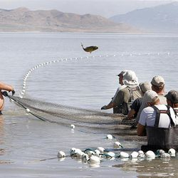 Bill Loy, left, flips a carp off the net as he and members of his crew gather in a net filled with carp in Utah Lake's Goshen Bay.