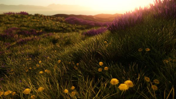 A field of wildflowers at dawn.