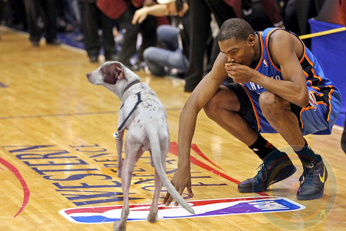 It's KD with a dog, because KD with a dog will make you feel better.