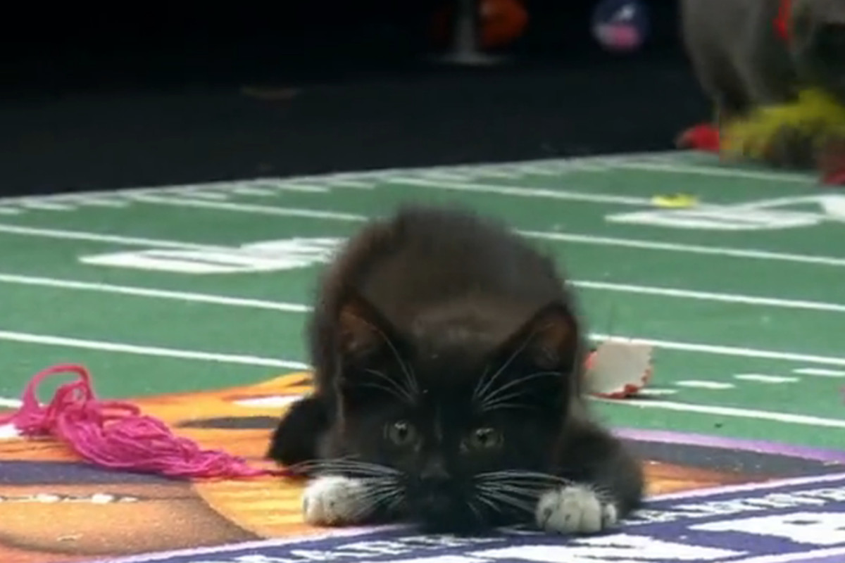 Kitten Bowl 2016 live stream Time TV schedule lineups and how