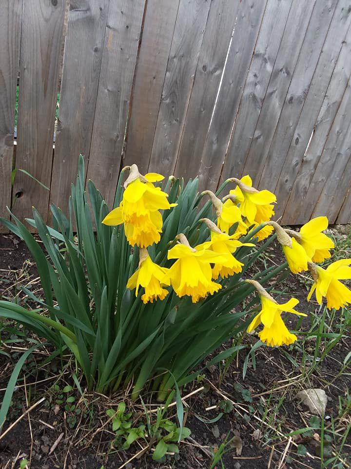 Spring flowers. Provided by Rob Abouchar
