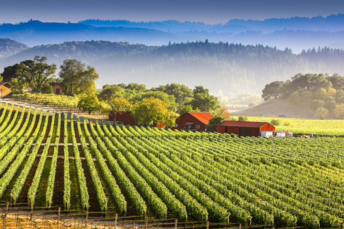 celebrate wedding anniversary - French Winemakers Are Headed for Napa Valley - Eater