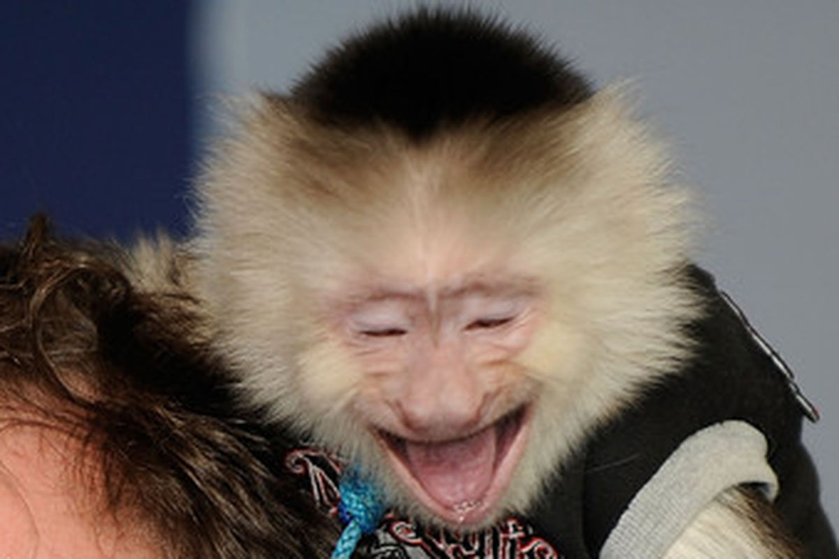 This monkey must have had plenty of reason to start drinking.