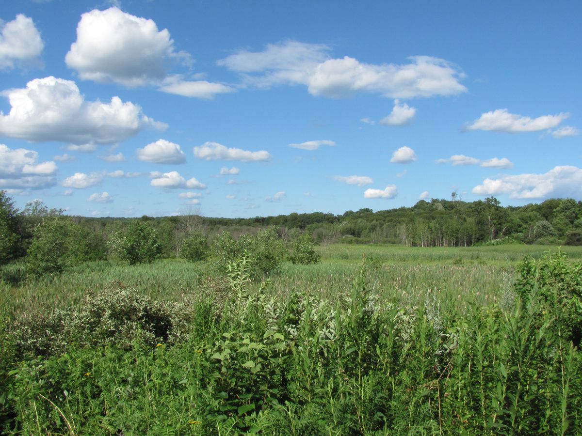A large, open meadow with long grass.