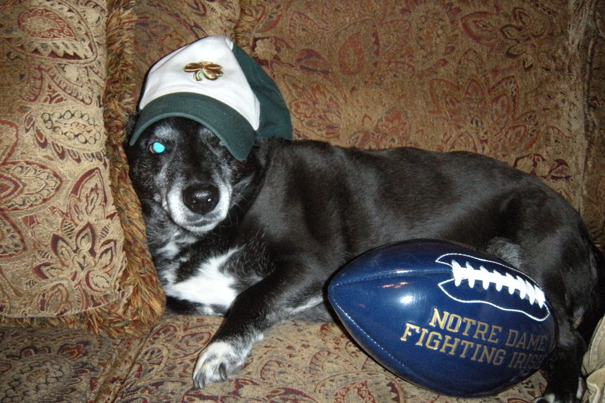 As fan of Notre Dame, what should you name your new dog?