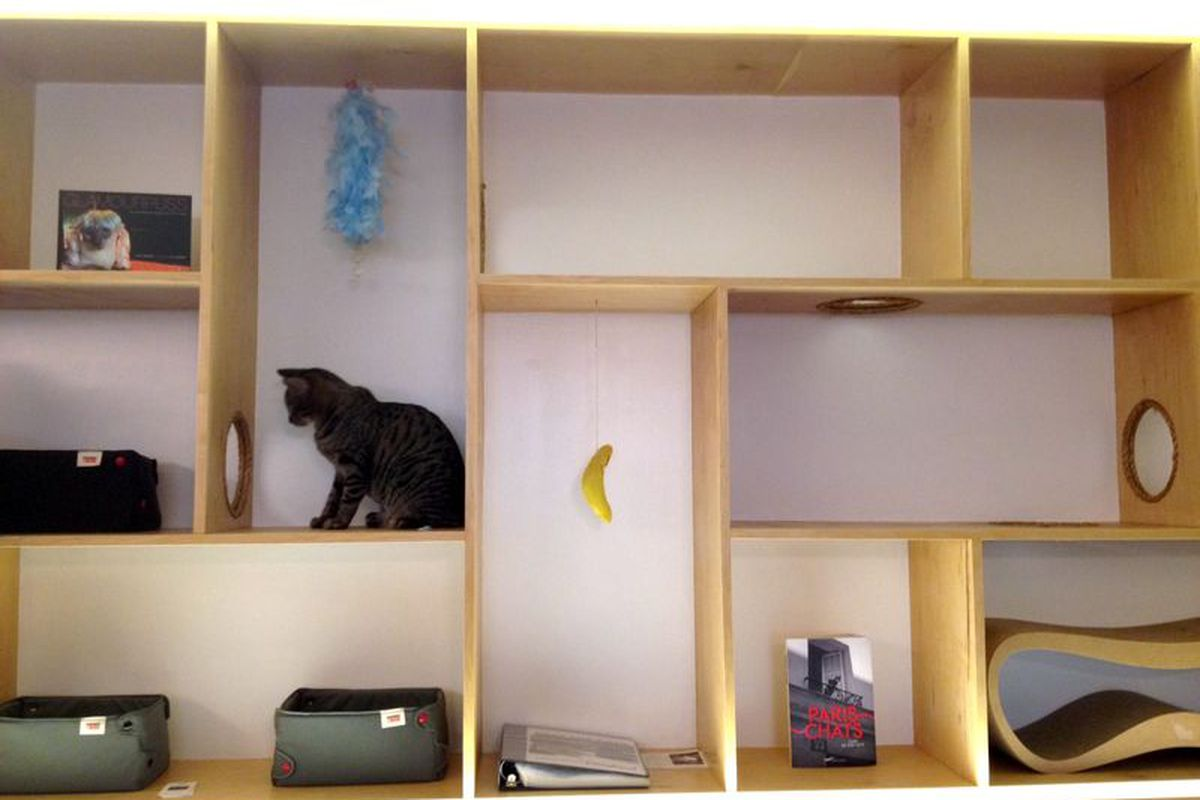 Cats play in a maze of cubbies at Meow Parlour, the city's first cat cafe.