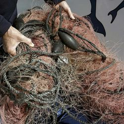 FILE - In this Nov. 30, 2015, file photo, Capt. David Anderson of Captain Dave's Dolphin and Whale Watching Safari in Dana Point, Calif., shows a net a whale was found entangled in. The Trump administration on Monday, June 12, 2017, threw out a new rule intended to limit the numbers of endangered whales and sea turtles getting caught in fishing nets off the West Coast, even though the fishing industry had proposed the measure.