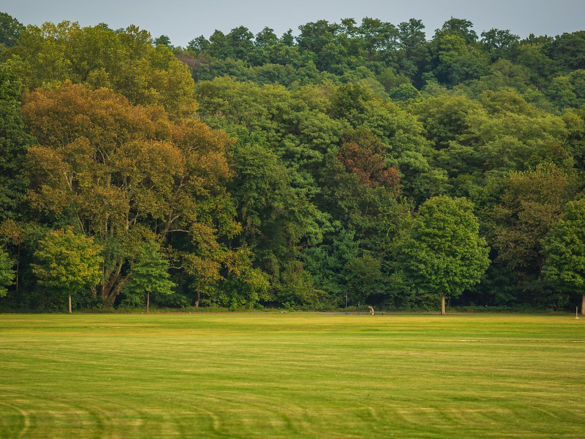 A grassy green and yellow lawn in front several lush green trees. Some of the learns on the trees have begun to yellow and brown.